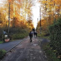 Ballade en forêt de Compiègne