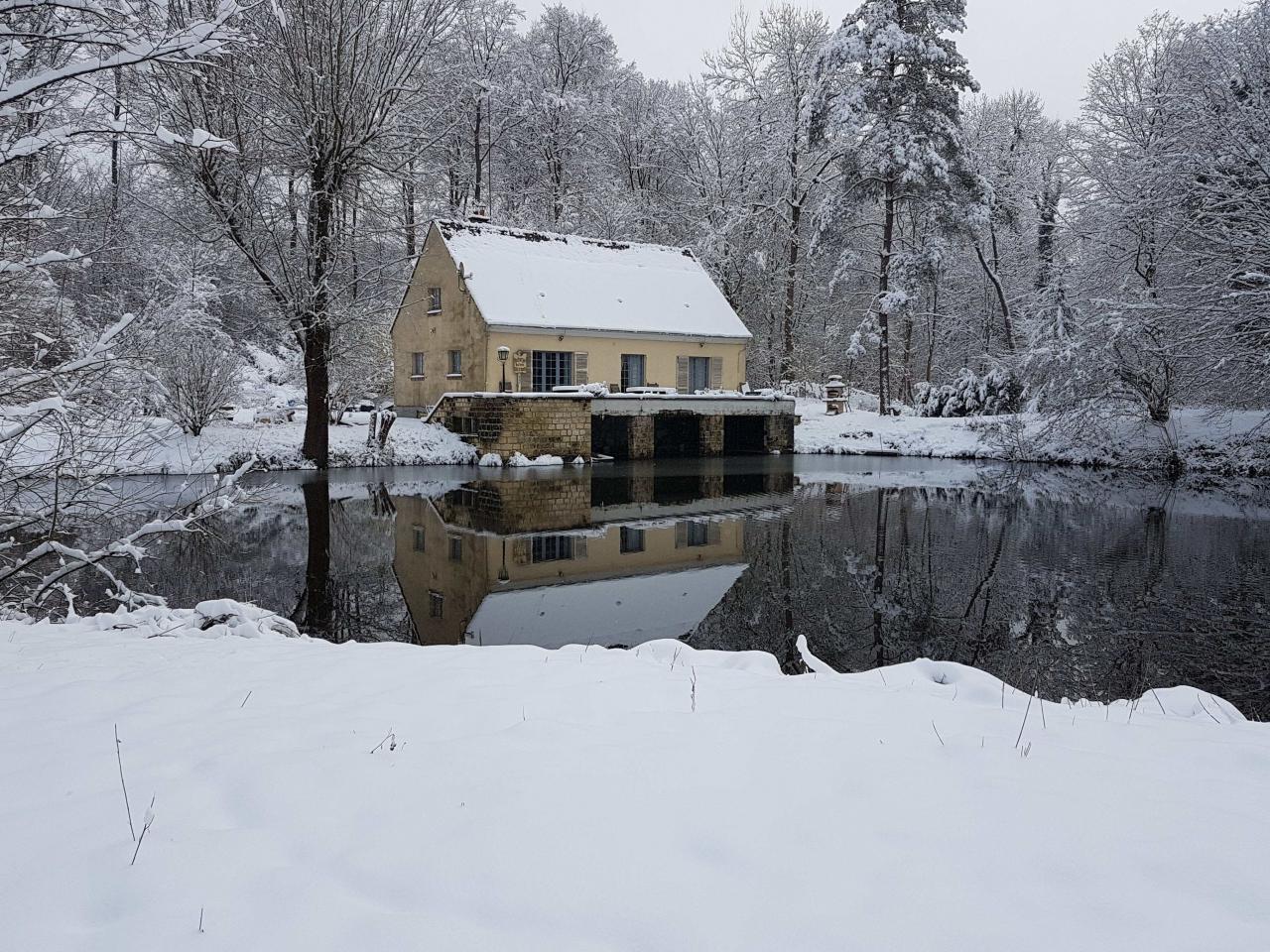 Nid dans la forêt sous la neige