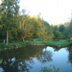 vu sur l'étang du jardin de saint jean